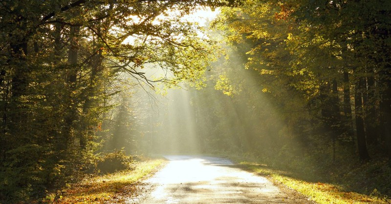 Sun beamed forest road