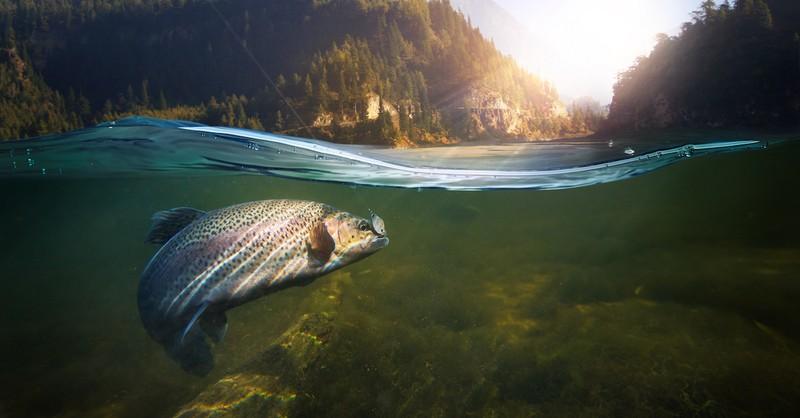 fish swimming in a lake, dagon in the Bible