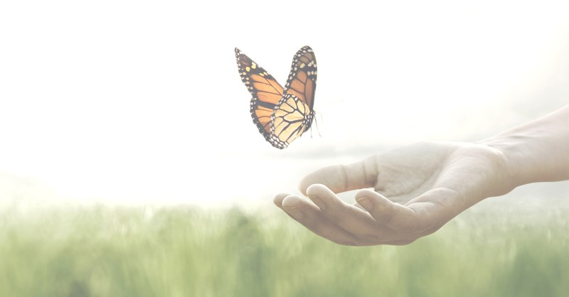 butterfly landing on a hand, surprising secret about joy and sorrow