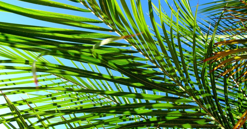 palm sunday, what is palm sunday