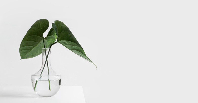 Green, leafy plant in a vase