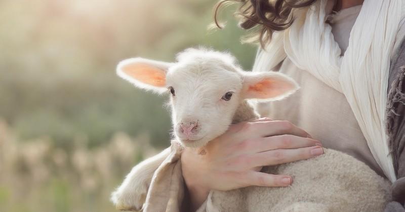 good shepherd, jesus good shepherd