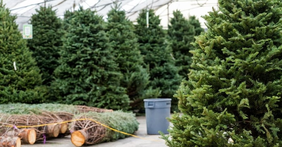 Two NYC Siblings Use Their Christmas Tree Business to Help the Homeless