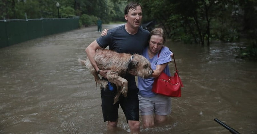 Local Dog becomes Symbol of Undefeatable Texas Spirit in Hurricane Aftermath