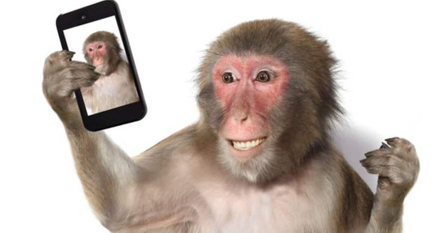 Monkey Takes Selfie and Makes Legal History