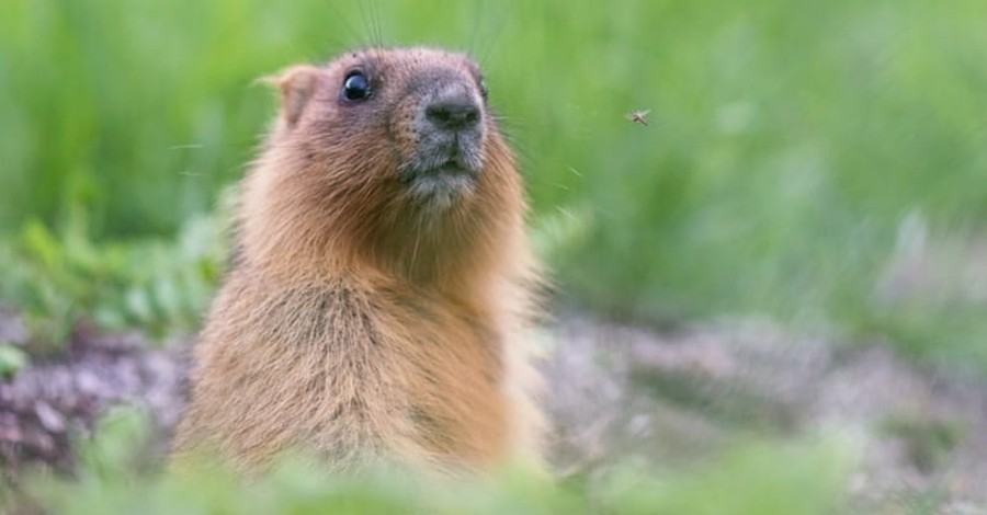Did You Know That Groundhog Day Has Christian Origins?