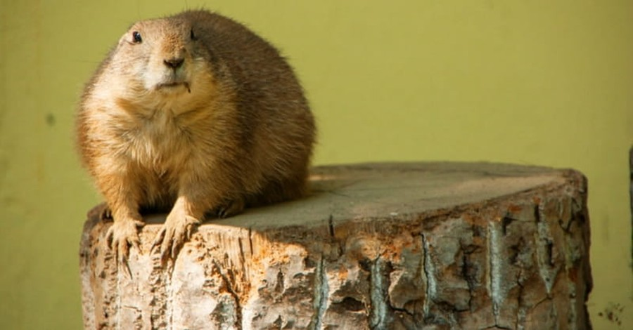 Groundhog Day: What You Should Know About the Future