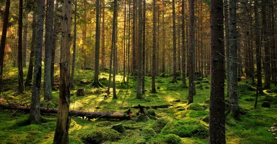 Talking Trees: Naturalism Has No Language of Wonder
