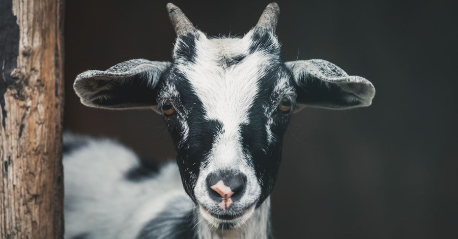 A Goat Who Became Mayor and the Full Worm Supermoon: The Eternal Purpose of This Life