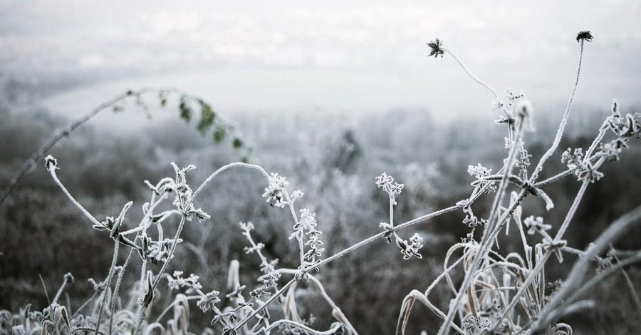 winter scene with frozen greenery