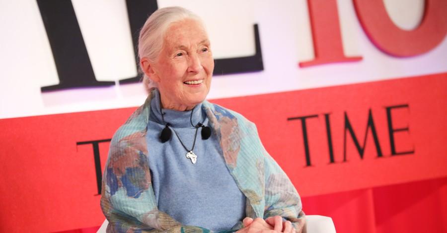 Jane Goodall, Goodall sees intelligent design but misses God's image