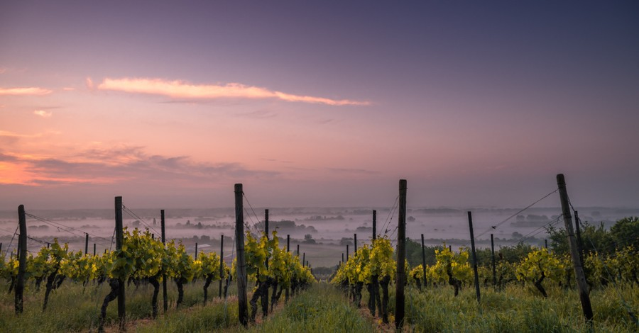 a wine vineyard, archaeologists discover ancient vineyard